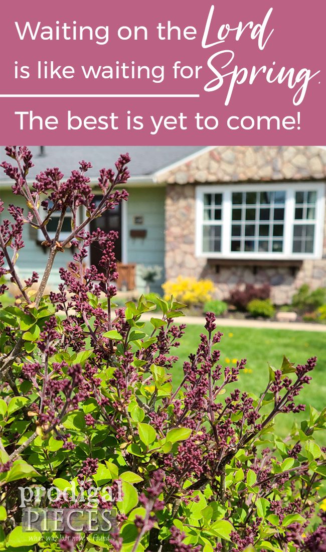 Waiting on the Lord is like waiting for Spring. The best is yet to come! Read more by Larissa of Prodigal Pieces | prodigalpieces.com #prodigalpieces #flowers #home #scripture #stress