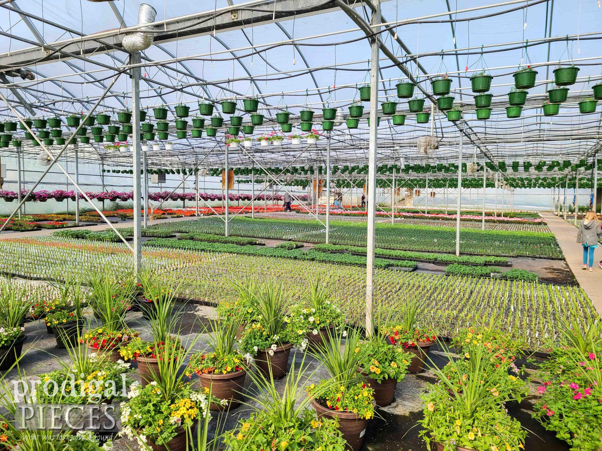 Greenhouse Full of Flowers | prodigalpieces.com #prodigalpieces