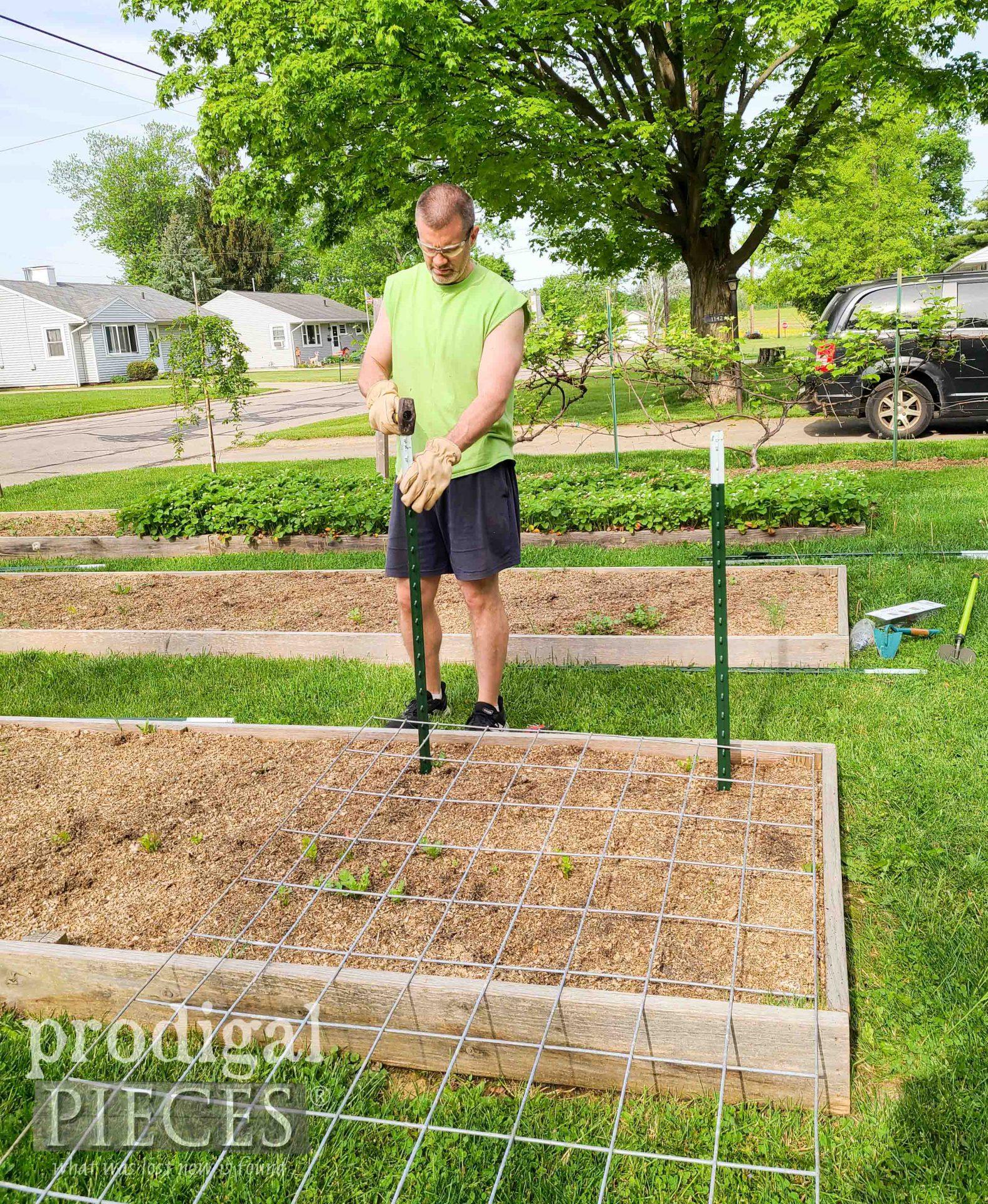 Pounding Garden Stakes for DIY Arched Trellis | prodigalpieces.com #prodigalpieces
