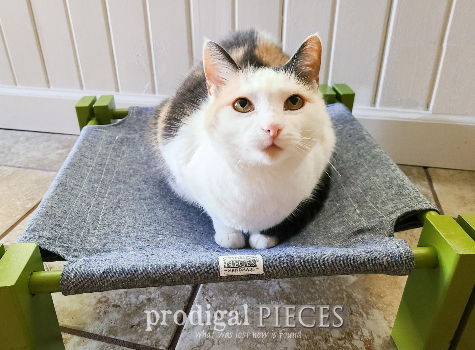 Featured DIY Cat Cot Hammock by Larissa of Prodigal Pieces | prodigalpieces.com #prodigalpieces #cats #cat #pet #dog